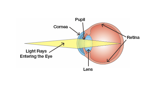 Illustration of how the eye works.